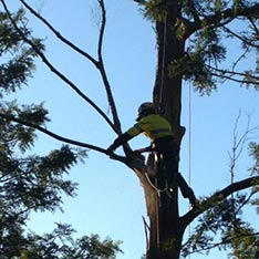 Tree services Sunshine Coast