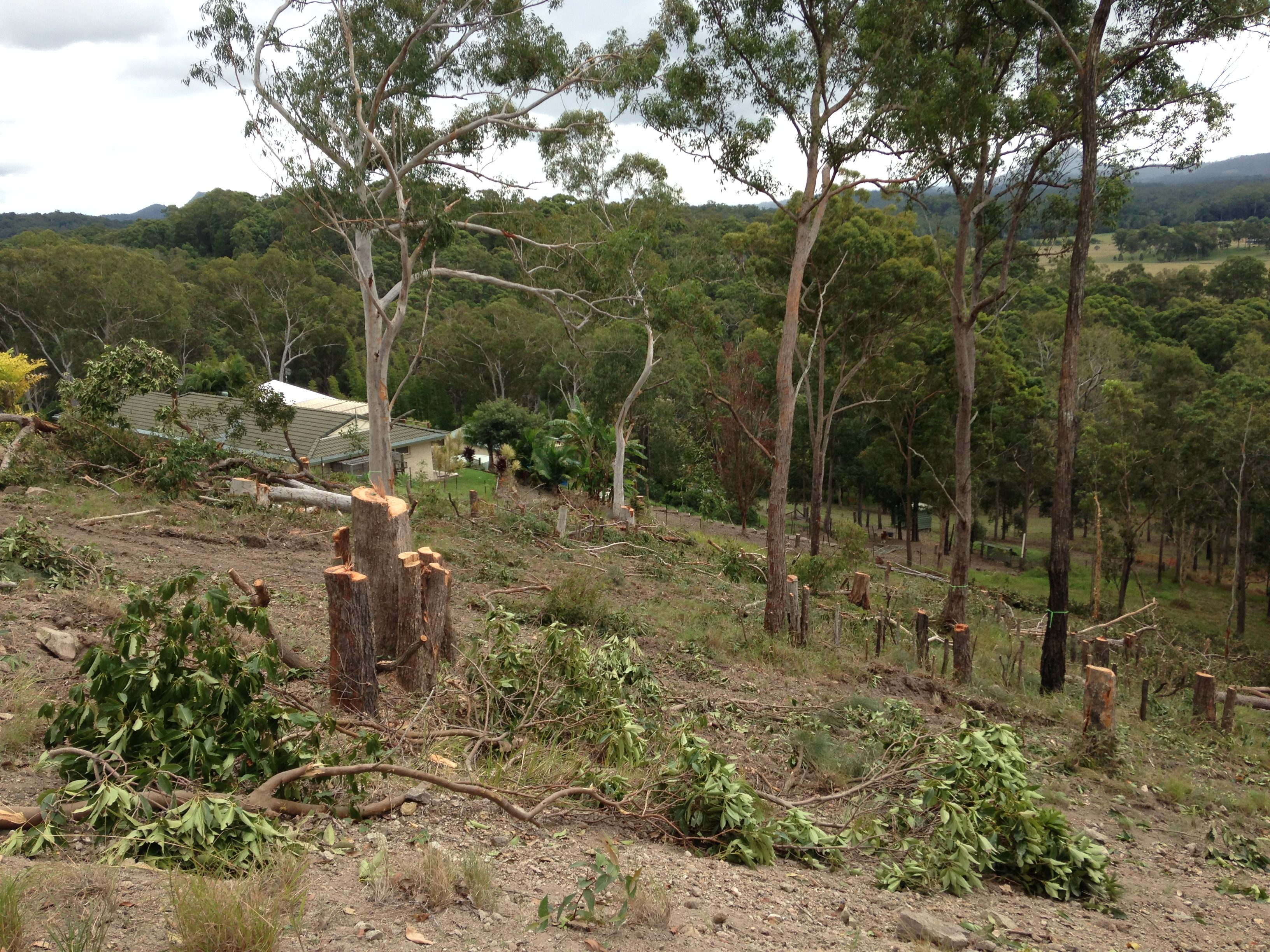 land clearing and block clearing sunshine coast