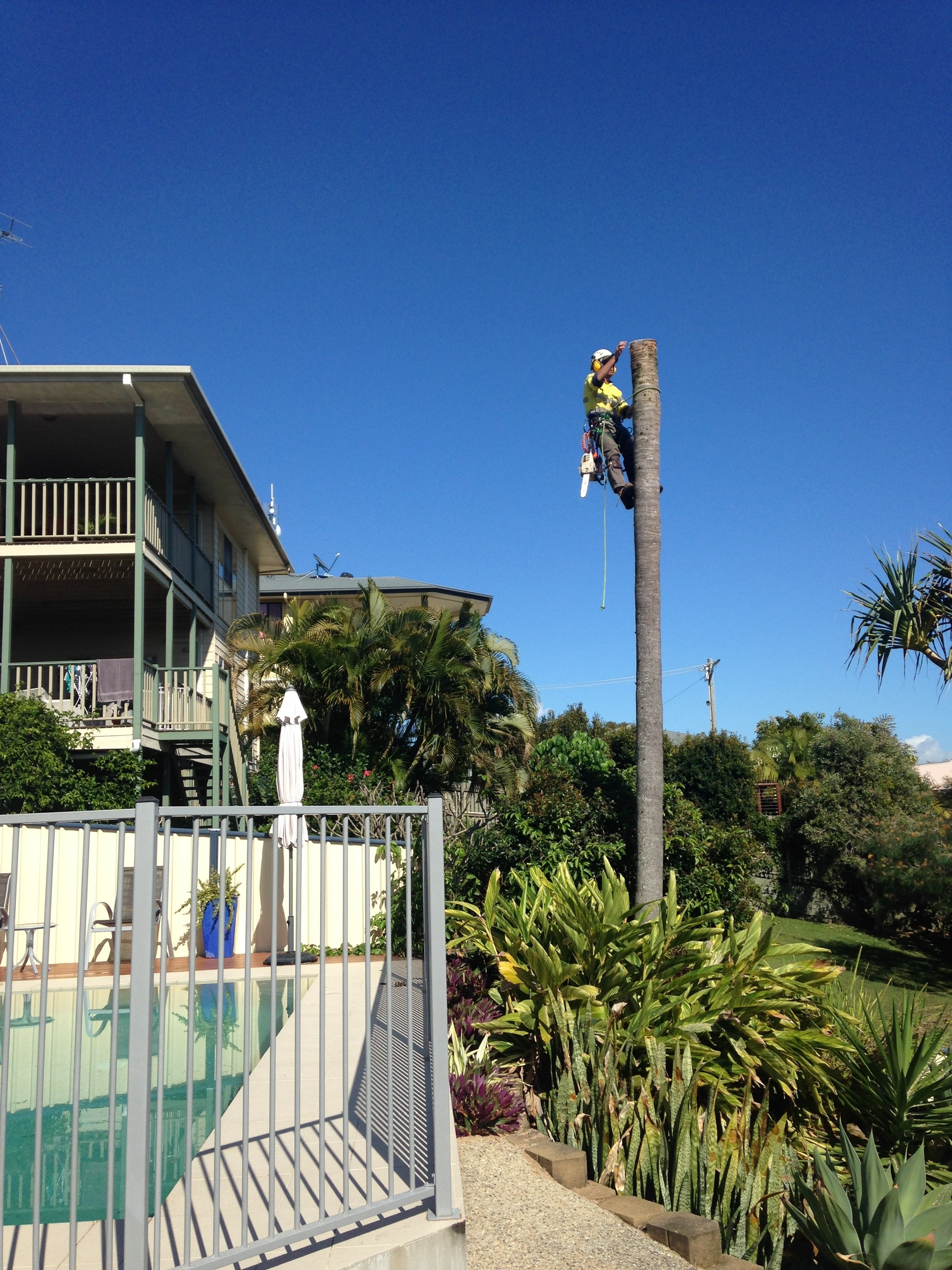 palm tree removal near pool area