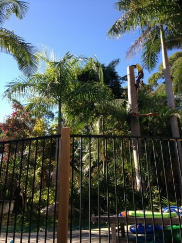 palm tree removal, palm tree cleaning