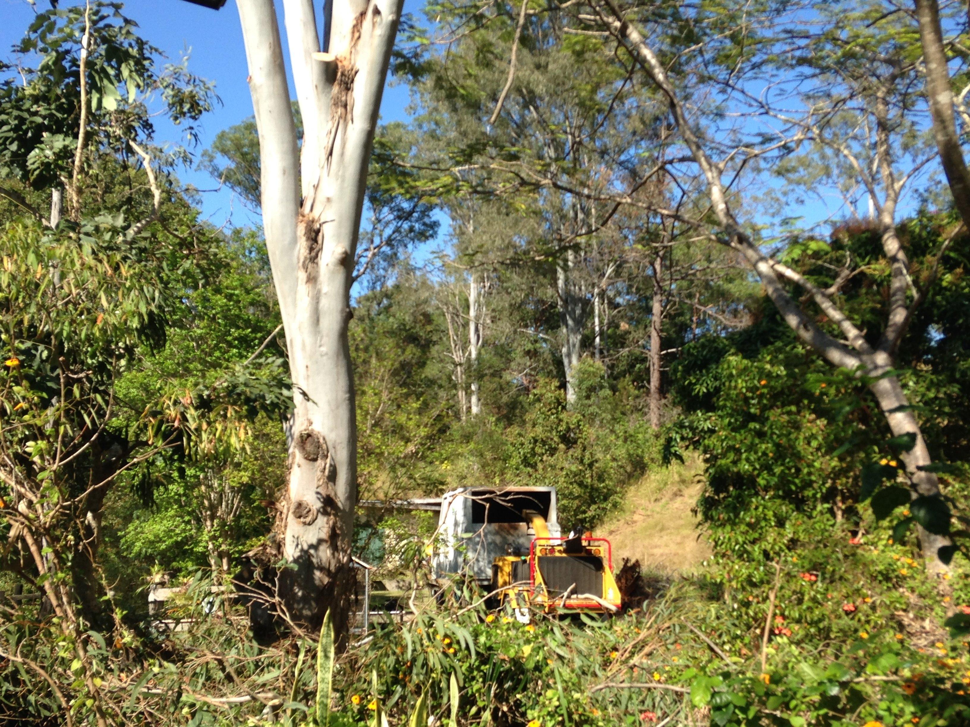 tree removal sunshine coast