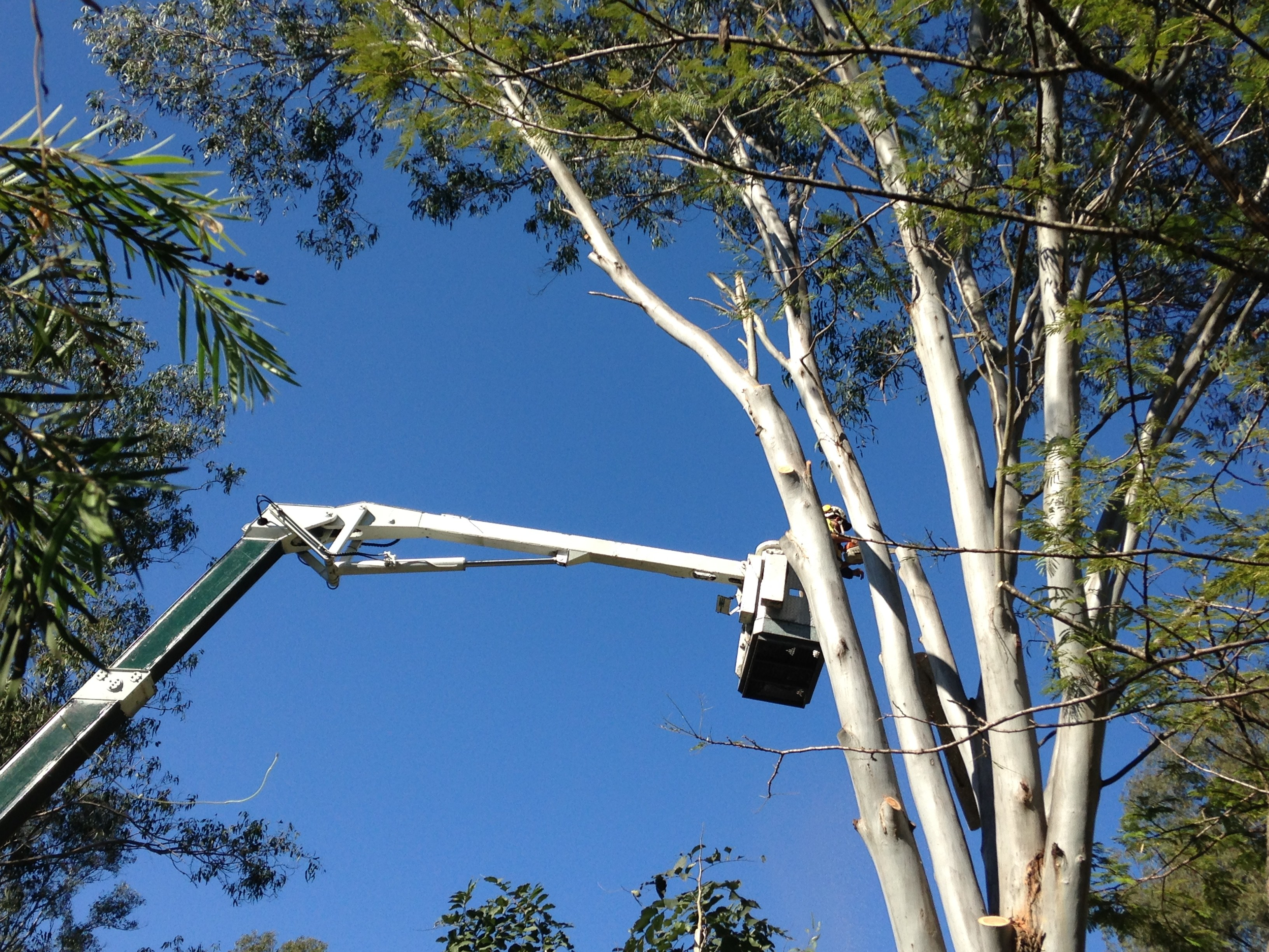 tree removal sunshine coast with cherry picker